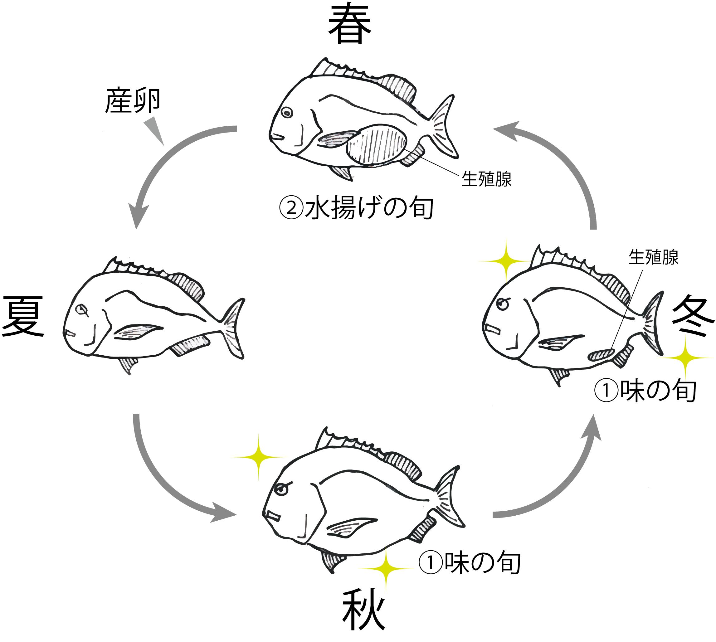 魚の旬アイキャッチ